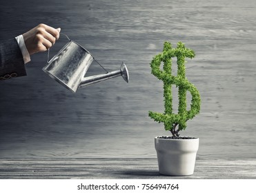 Hand of woman watering green dollar tree growing in white pot