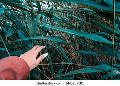 Hand of a woman while exploring lake with bullrush. Bulrush outdoor close up. Young explorer background.