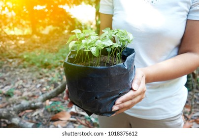 Hand of women holding planted with nursery bags.