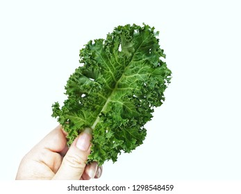 Hand of women picking a kale with copy space.Dark green leafy vegetables that are famous for food or super food.