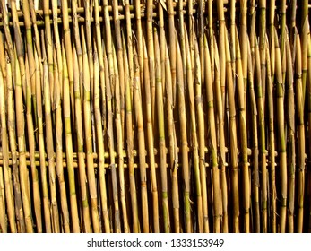 Hand woven bamboo fence in rural Mexico