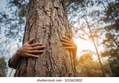 The hand of a young man embracing a pine tree.