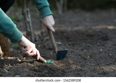 Hand of young woman is digging in the patch during springtime in the garden.
