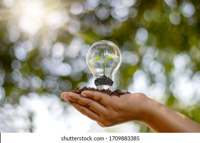 The hand of a young woman holding an energy-saving lamp, including a small tree growing in an energy-saving lamp and changing to renewable energy.