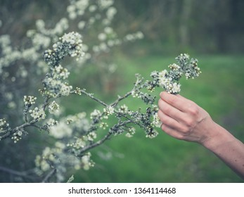 The hand of a young woman is touching some lichen on a tree outdoors