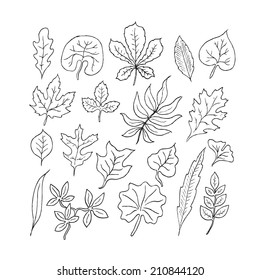 Hand-drawn leaves doodles set. Black silhouettes on white background.
