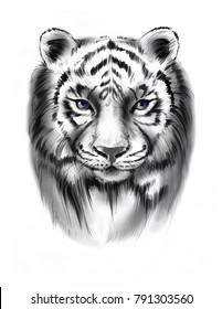 Hand-drawn pencil portrait of the tiger in graphic style. Tattoo sketch, black and white animal illustration.