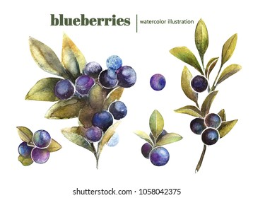 handdrawn watercolor blueberries set