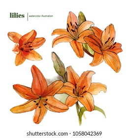 handdrawn watercolor lilies set