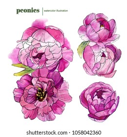 handdrawn watercolor peonies set