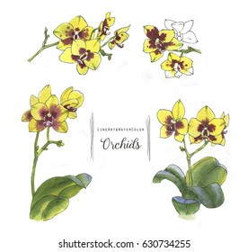 Hand-drawn watercolor yellow orchid set. line art illustration