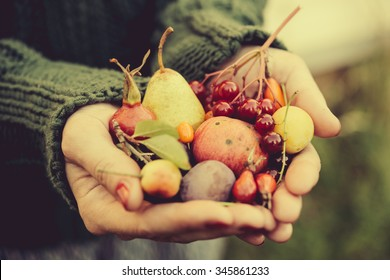 Handful of autumn berries and fruits. Toned image