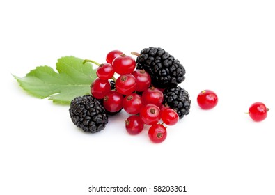 A handful of fresh ripe mulberries and red currants