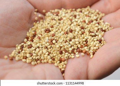 A handful of grains of kinoa or  quinoa in the hand of a woman, close-up