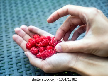Handful of ripe raspberry filled in a female hand on table in the garden