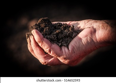 A handful of soil.Soil in old female hand