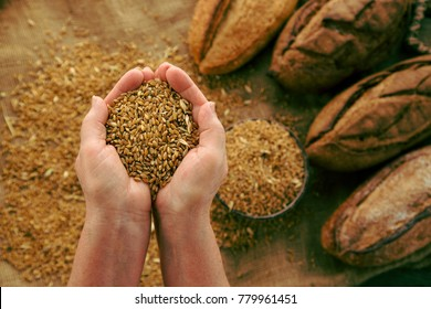 Handful of wheat grains with homemade bread on background. Concept of healthy lifestyle, organic food as nutrition.