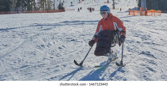 handicapped person goes snow slalom mono ski downhill skiing - rehabilitation and winter sports for wheelchair athlete