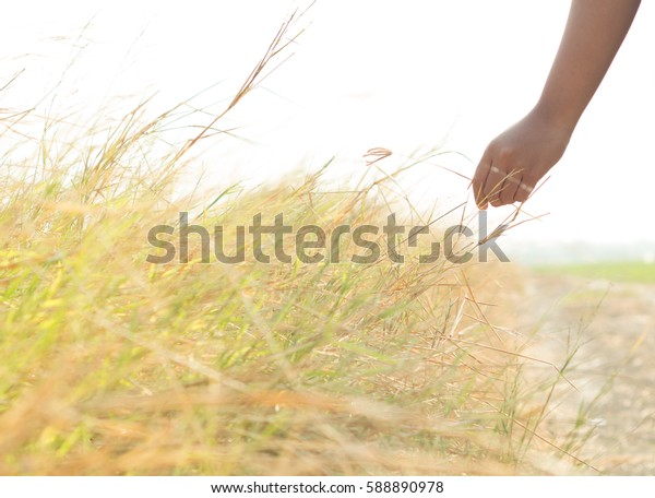 Handle grass