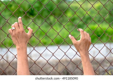 Handle Steel Cage