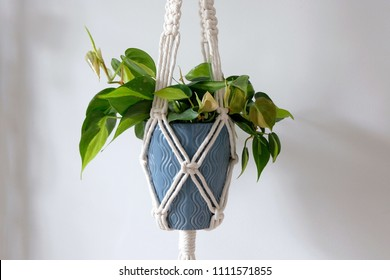 A Hand-Made Cotton Macrame Plant Hanger. A Pothos Plant is Hanging in a Blue Vase. 100% Cotton.