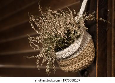 handmade crocheted flower pot with plant velesk (Calluna) on wooden wall of rustik house
