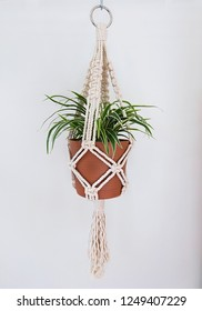 A hand-made macrame plant hanger made using 100% natural cotton. This cotton is 5mm thick. A metal ring is used for hanging. A spider plant is in the pot.