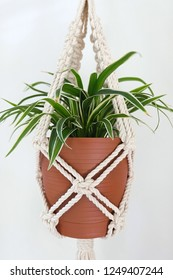 A hand-made macrame plant hanger made using 100% natural cotton. This cotton is 5mm thick. The plant in the pot is a spider plant.