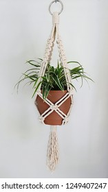 A hand-made macrame plant hanger made using 100% natural cotton. This cotton is 5mm thick. A metal ring is used for hanging. A spider plant is being hung.