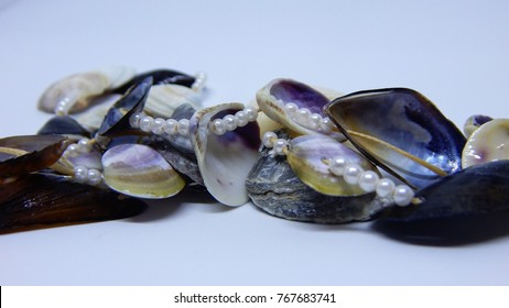Hand-made necklace from sea shells on white background