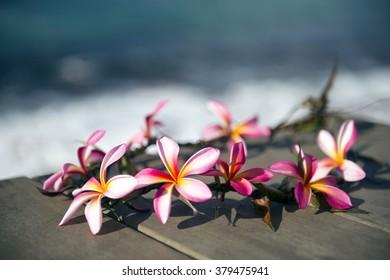 Handmade Ray of frangipani-10