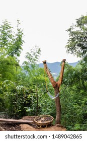 Handmade slingshot catapult. Y-shaped wooden stick with elastic tied between two top parts. Slingshot or Catapult is device for shooting  tree seeds into forest for Tree propagation.