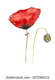 Handmade watercolor poppy flower