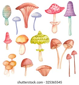Hand-painted watercolor autumn mushroom collection. Painted fall botany illustration.