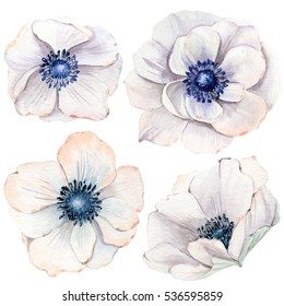 Handpainted watercolor flowers set in vintage style. It's perfect for greeting cards, wedding invitation,  birthday and mothers day cards.  Watercolor botanical illustration isolated.