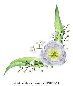 Hand-painted watercolor white tulips composition on white background