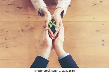 Hands adult business  partner and Team Work harmony Cupping young Plant and seeding Nurture grow Environmental and reduce global warming help earth, top view. Ecology sustainable Concept