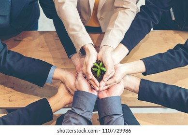 Hands adult business Team Work harmony Cupping young Plant and seeding Nurture grow Environmental and reduce global warming help earth, top view.  Ecology Concept