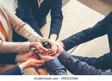 Hands adult business Team Work partnership harmony Cupping young Plant and seeding Nurture grow Environmental and reduce global warming help earth, top view.  Ecology agriculture Concept