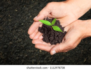 Hands of adult holding plant - Shutterstock ID 1112978738