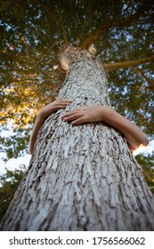 Hands and arms wrapped around tree trunk below looking up at canopy