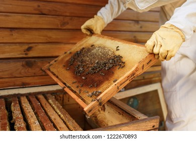 hands of beekeeper pulls out from the hive a wooden frame with honeycomb. Collect honey. Beekeeping concept