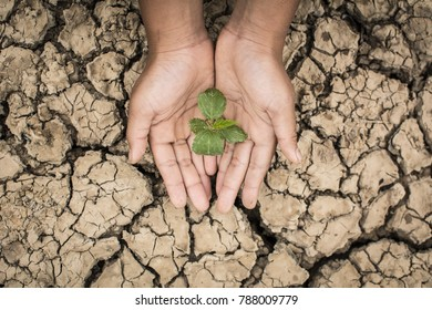 Hands of boy save little green plant on cracked dry ground, concept drought and crisis environment
