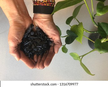 Hands with bracelets holding biochar next to a green plant