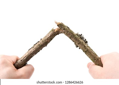 Hands breaking a twig. Isolated on white background.