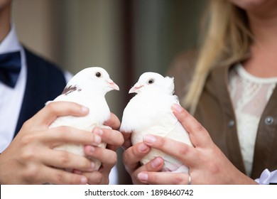Hands of the bride and groom hold wedding white doves.