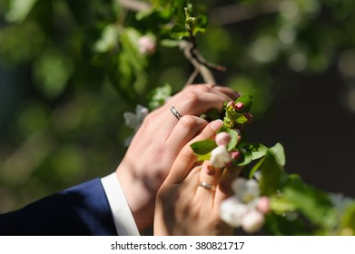 Hands of the bride and groom touch blossoming branches of apple trees. Focus on the hand of the groom and wedding ring.