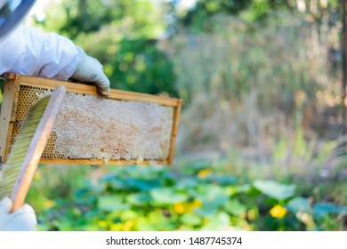 Hands brushing bees from a bee hive