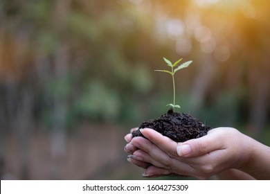 In the hands of cannabis growing seedling, Female hand holding marijuana seedlings, On nature field grass forest conservation concept