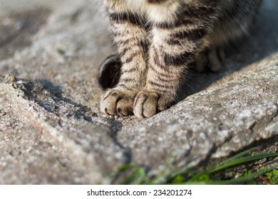 The hands of the cat